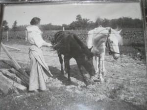 Frances Shea Klein     Wisconsin 1908