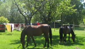 2011 IFEAL Herd