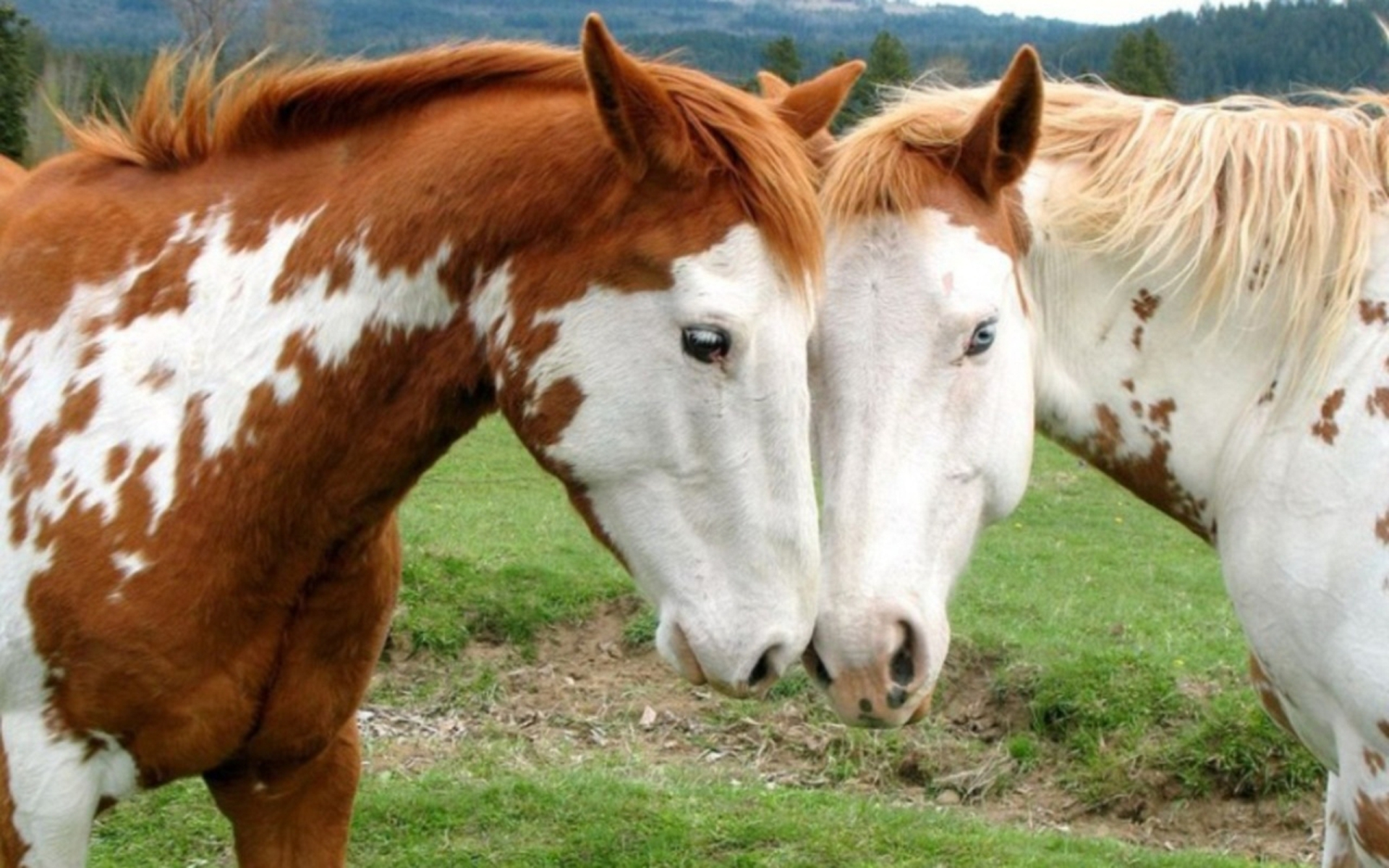 love-for-mhorses